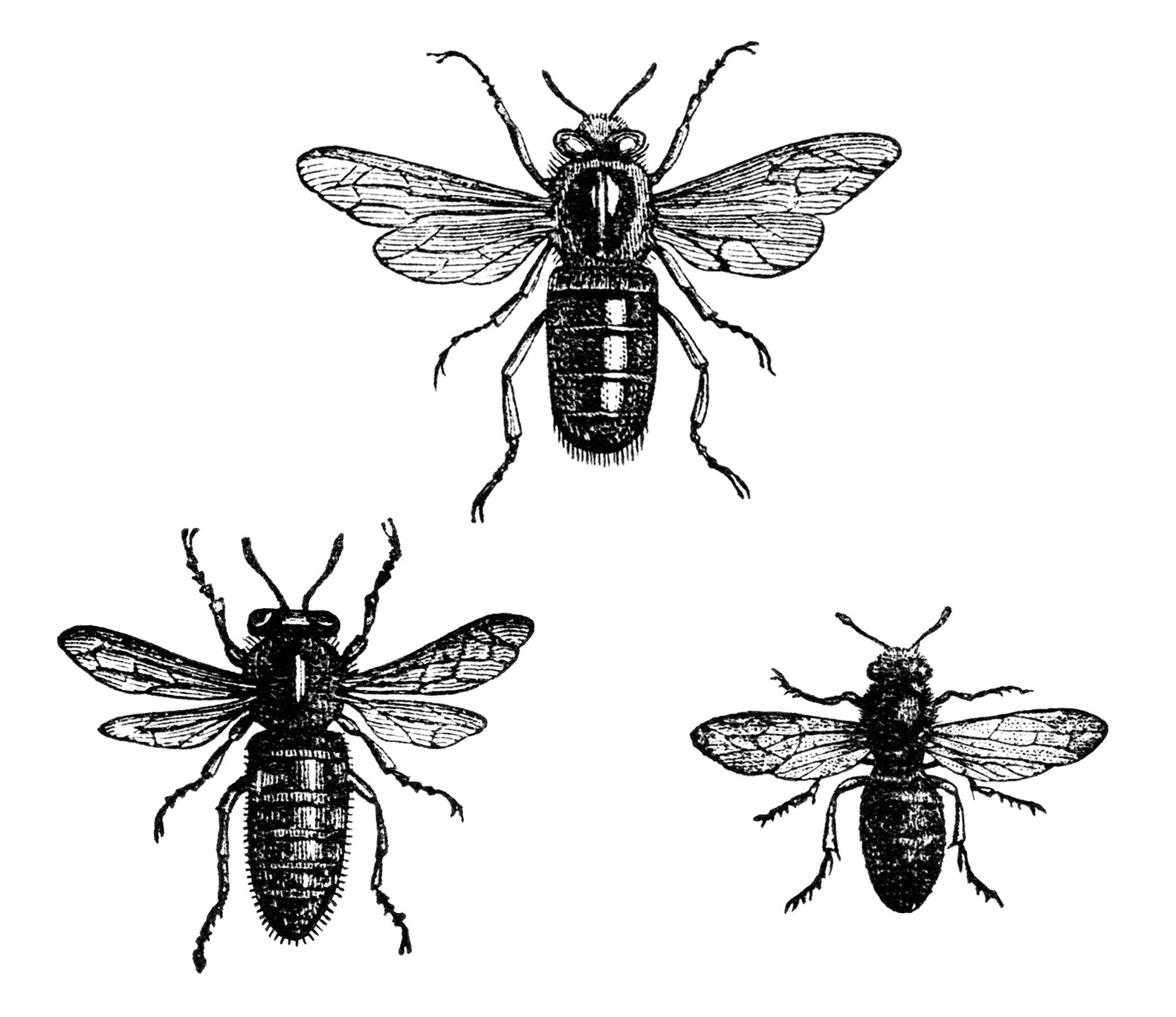 Clipart bee vintage. Free clip art image