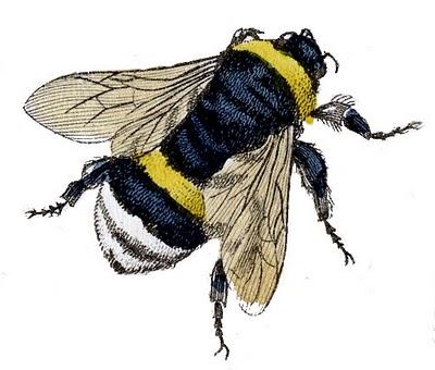 Clip art fabulous bumble. Bumblebee clipart vintage