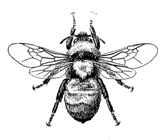 Bee clipart vintage. Image and dictionary definition