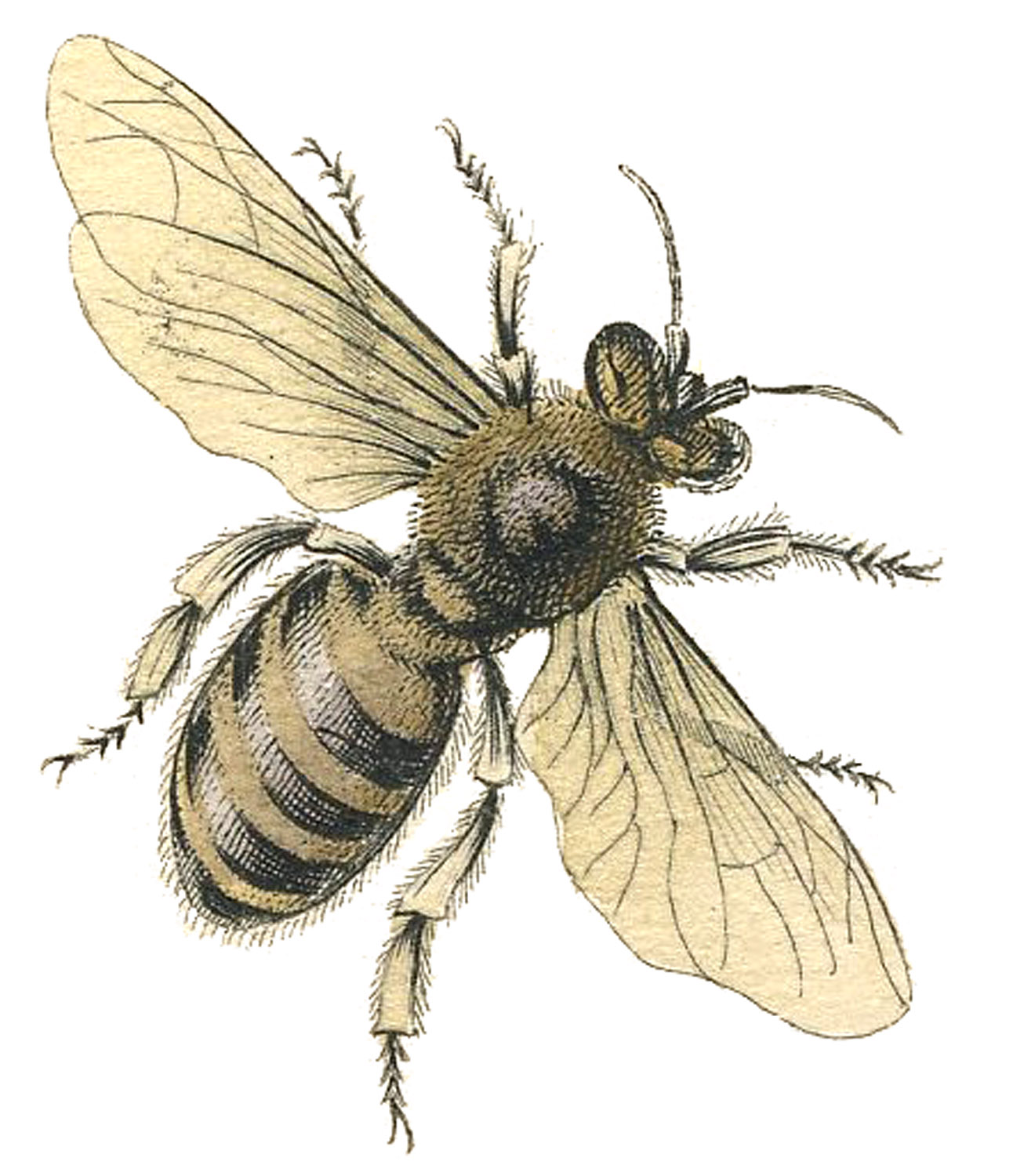 Bees clipart victorian.  bee images honey