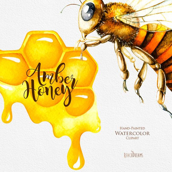 Honey honeycomb hand painted. Bee clipart watercolor