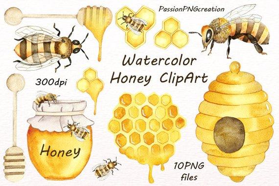Honey bee clip art. Bees clipart watercolor