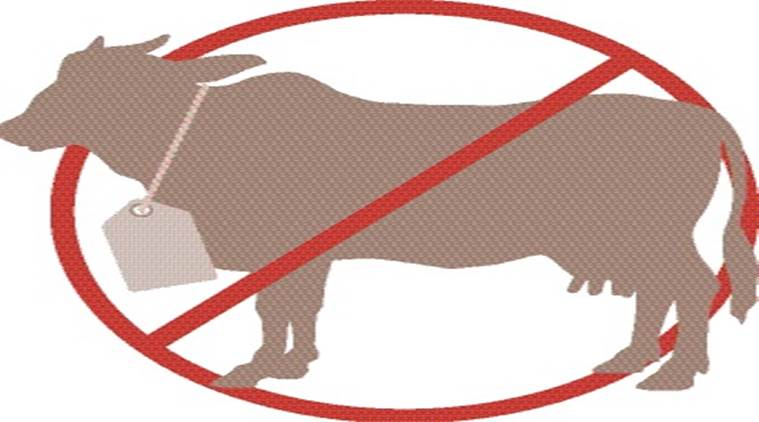 No beef ban in. Cattle clipart cow indian