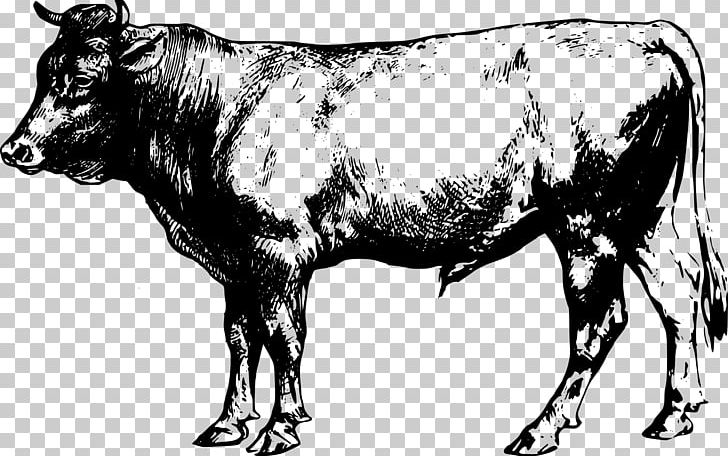 Farm livestock png . Beef clipart beef cattle