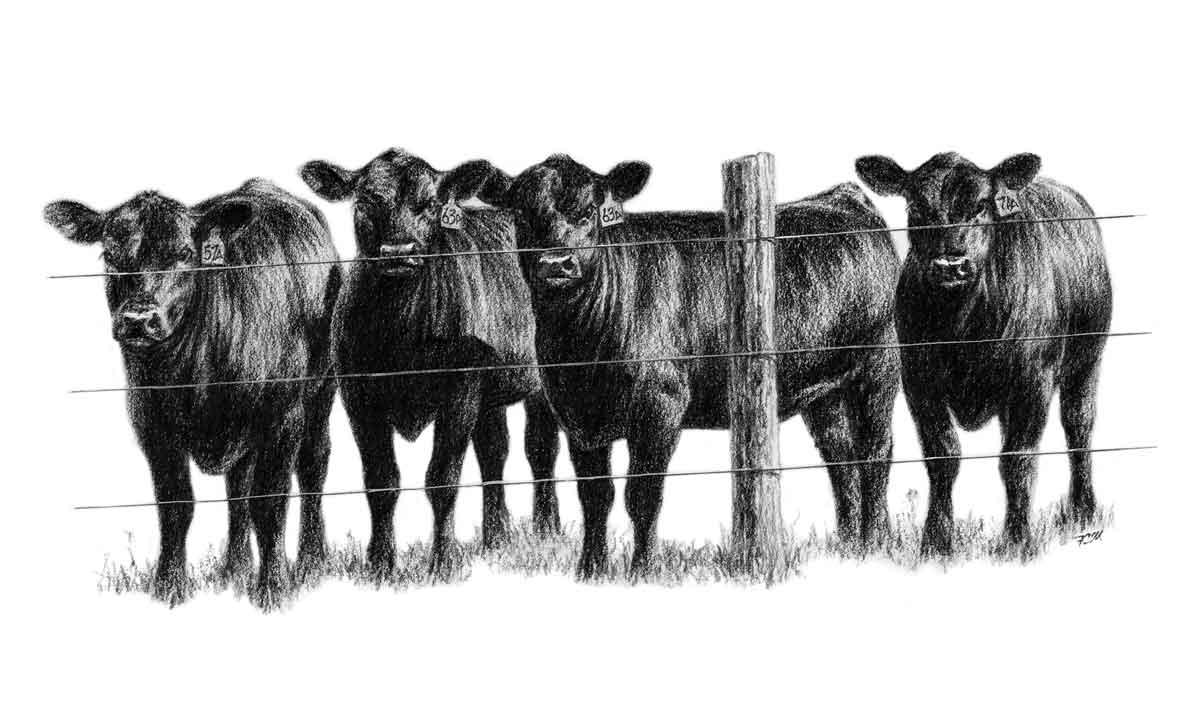 Angus clip art . Cattle clipart cattle ranch