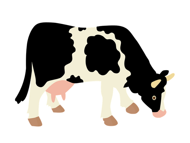 Cow png image free. Beef clipart transparent background