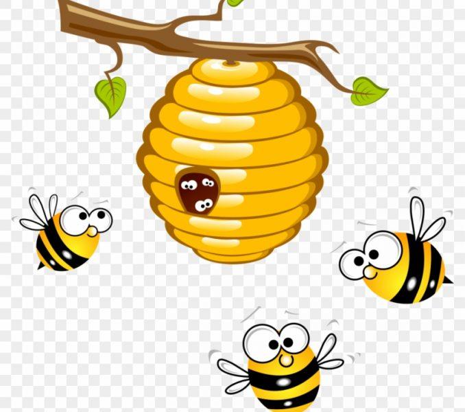 Beehive clipart drawn. Honey bee drawing cartoon
