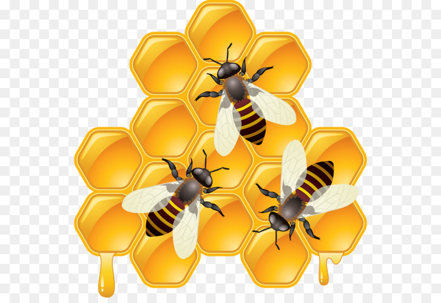 Honeycomb clipart beehive. Bee background