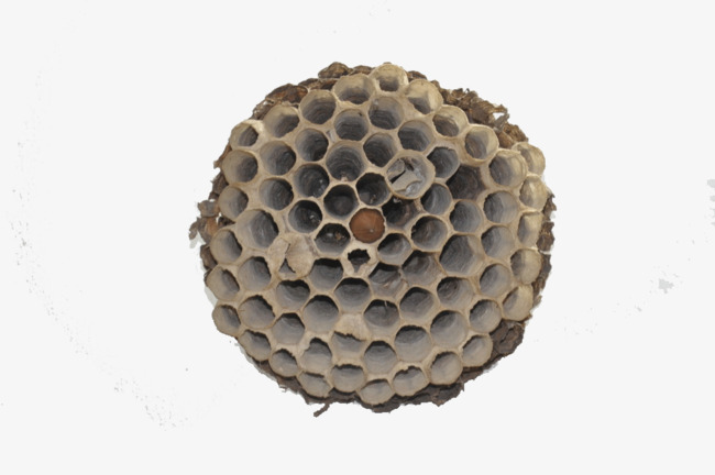 Beehive clipart hornet nest. Pictures s honeycomb png