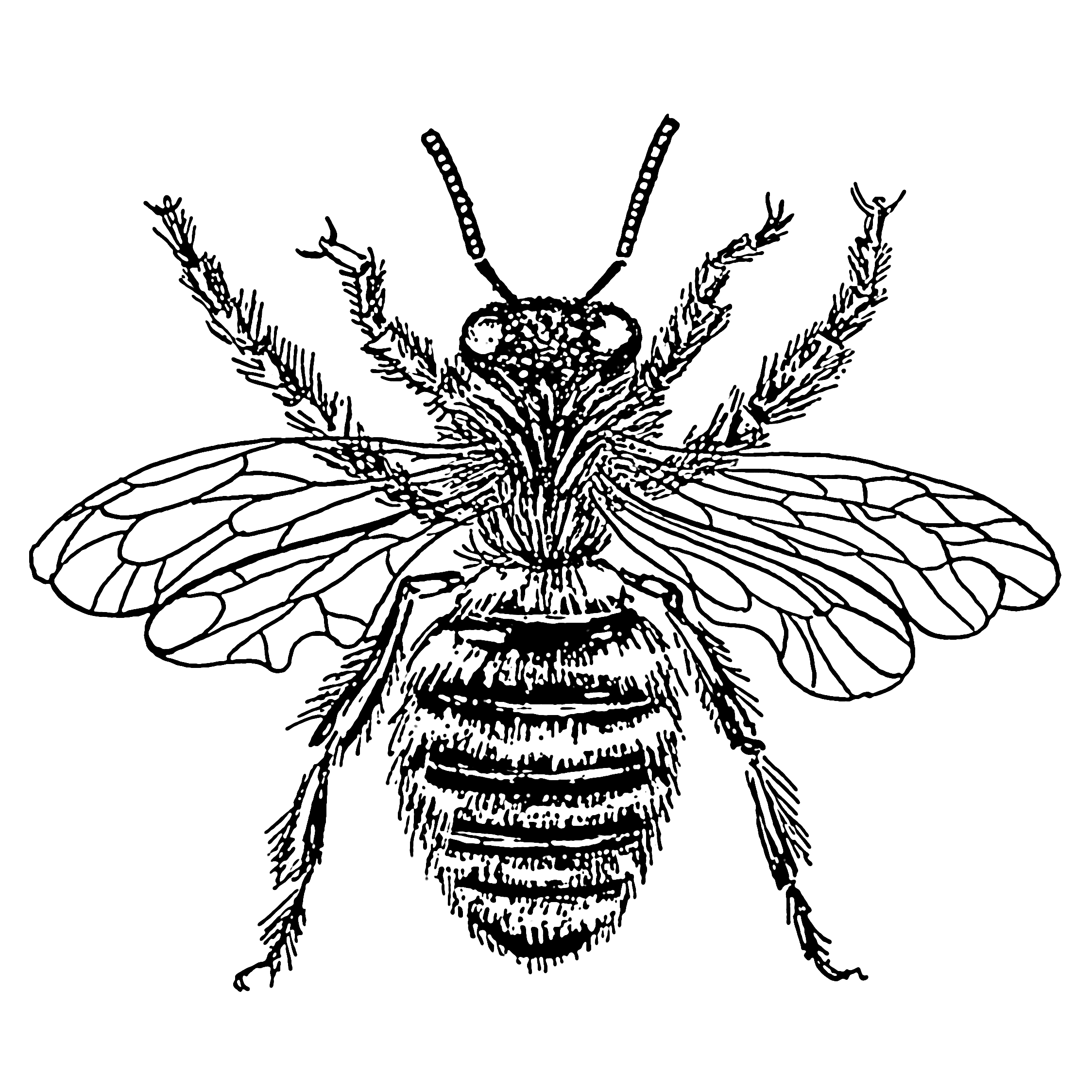 How to draw a. Beehive clipart sketch