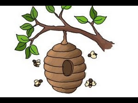 Honeycomb clipart tree drawing. How to draw a