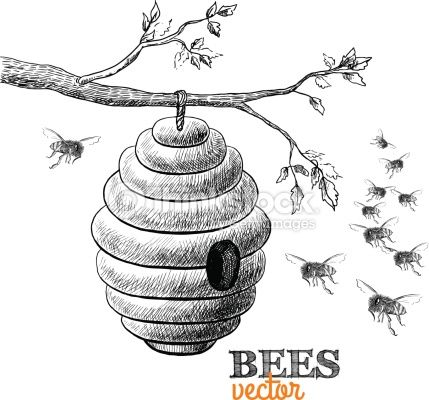 Honeycomb clipart sketch. Beehive drawing google search