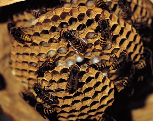 How to remove chimney. Beehive clipart wasp nest