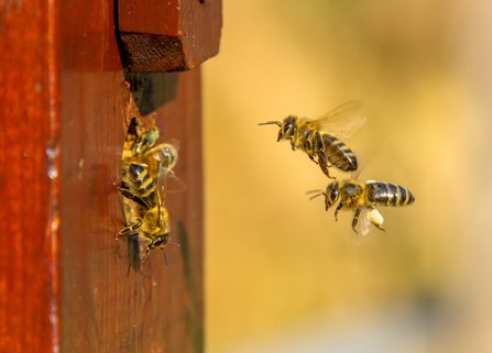 What s the difference. Beehive clipart wasp nest