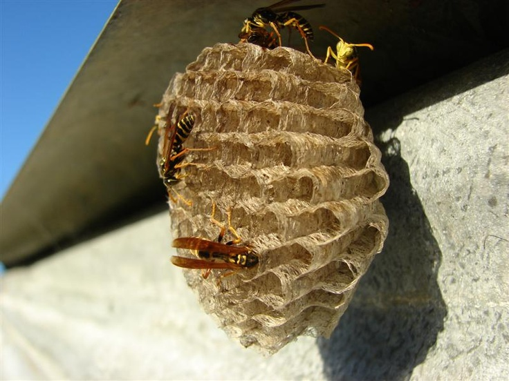 best wasps inspiration. Beehive clipart wasp nest