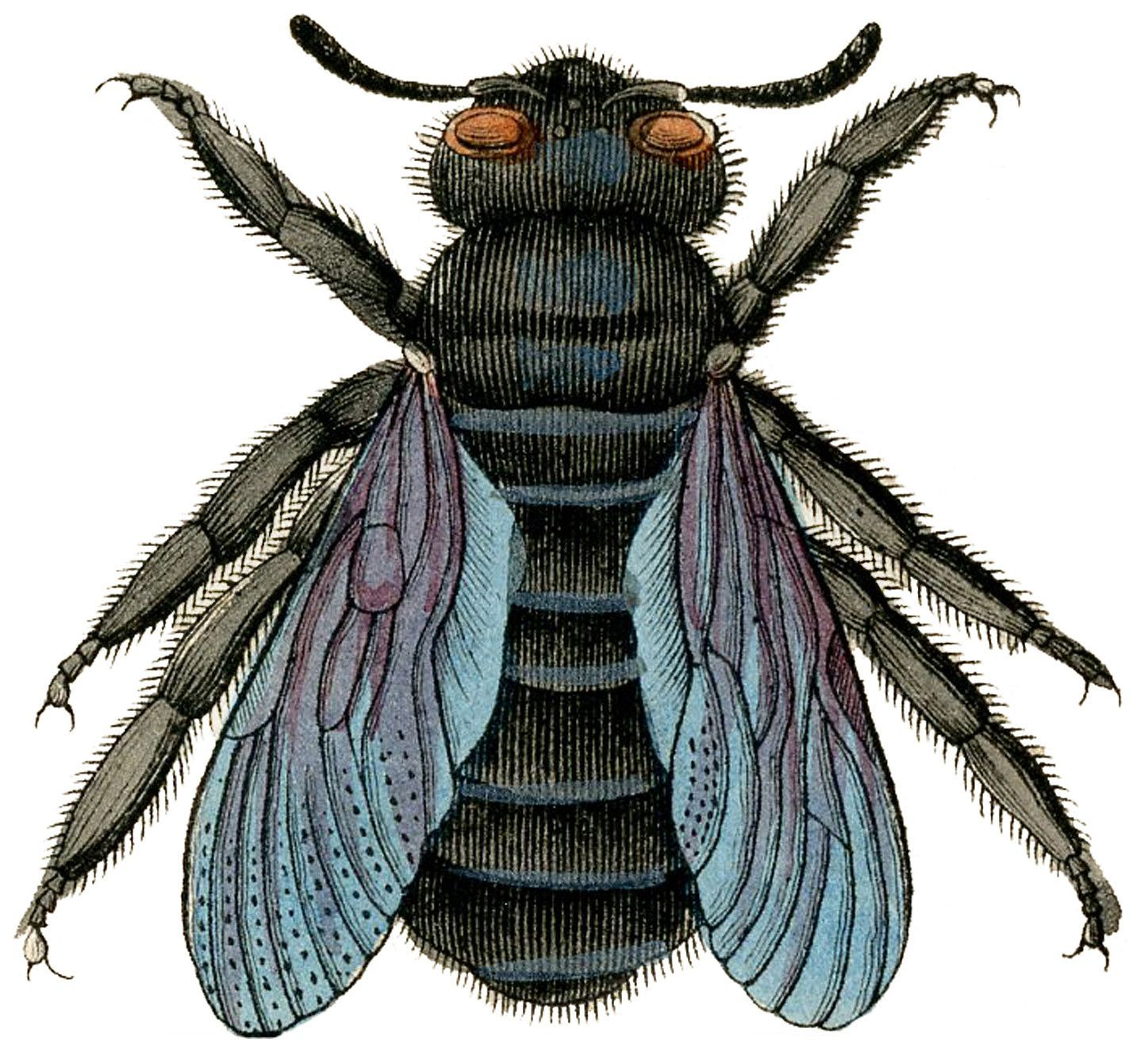 Bees clipart carpenter bee. Set of waterproof temporary