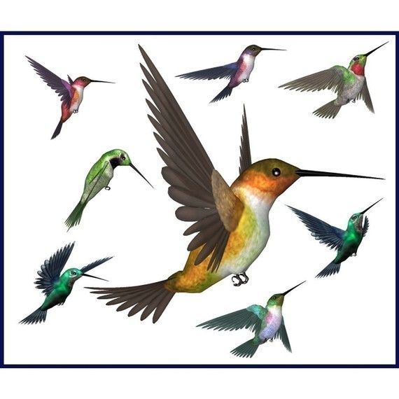 Bees clipart hummingbird. Hey i found this