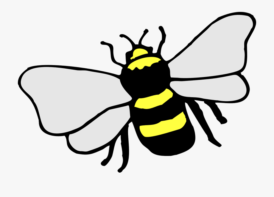 Bumblebee honey clip art. Bees clipart simple