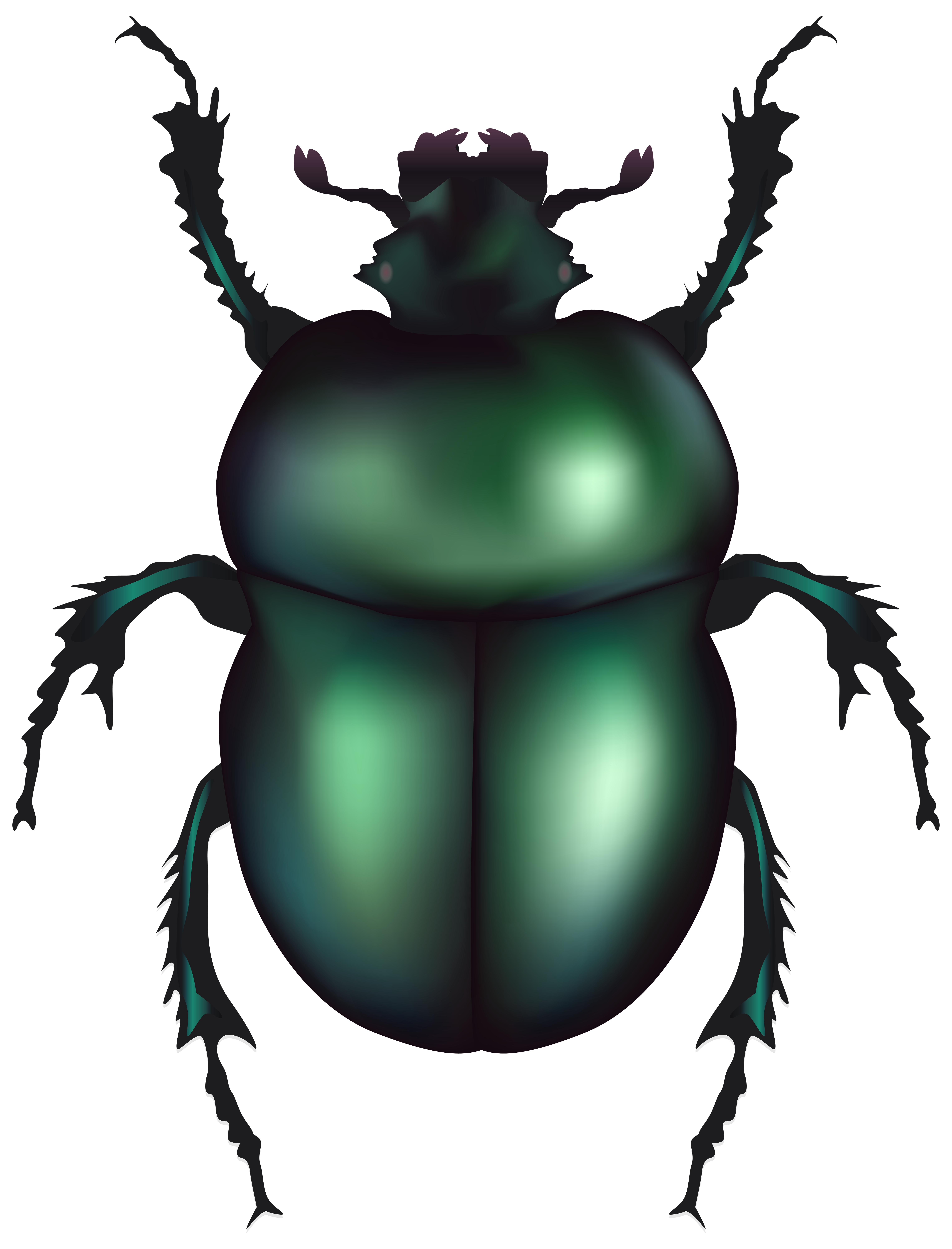 Green rose chafer png. Beetle clipart