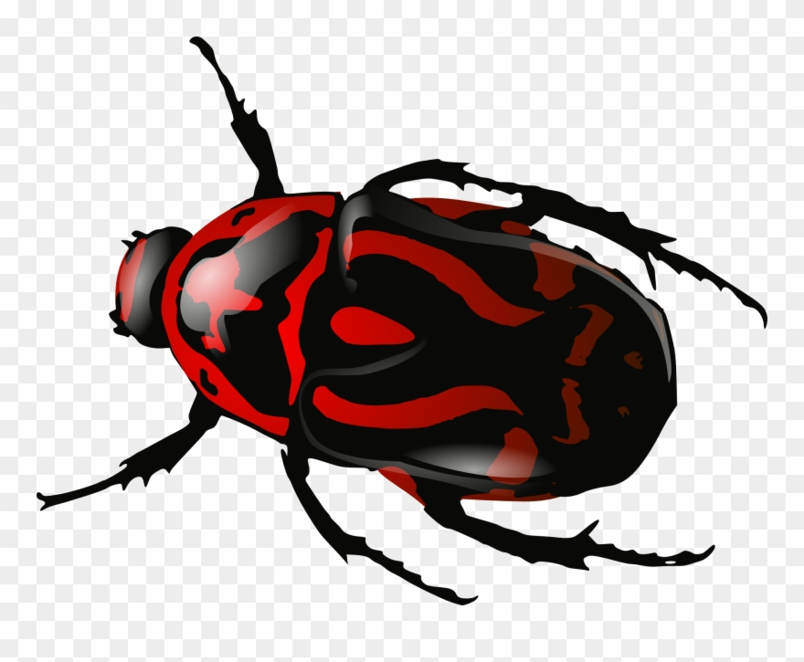 Beetle clipart. Bug insect black red