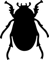 Beetle clipart. Search results for clip