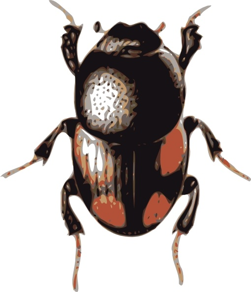 Insect clip art free. Beetle clipart