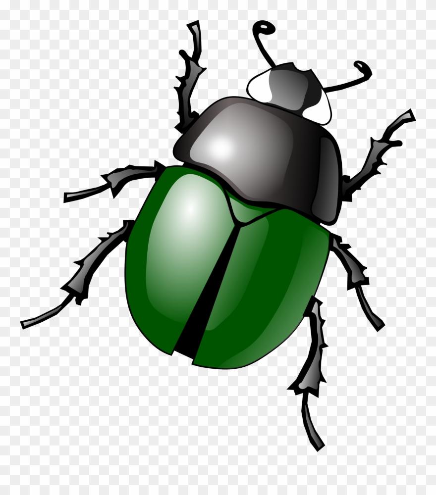 Bug clip art free. Beetle clipart