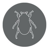 Beetle clipart animated. Animals gifs insect outline