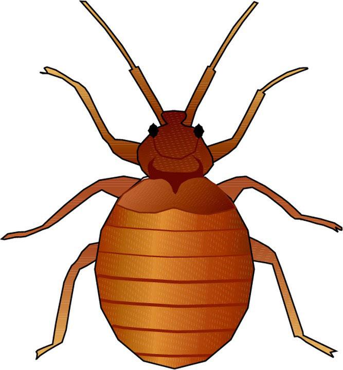 Bugs clipart animated. Bug