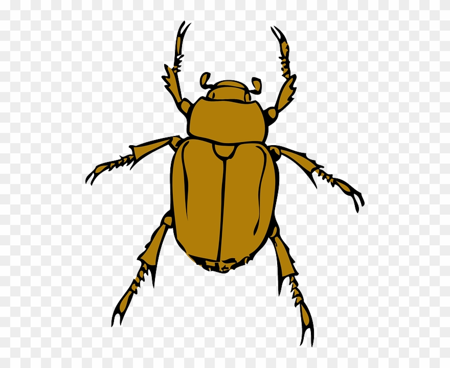 Beetle clipart animated. Cartoon bugs bug insect
