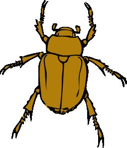 bug clipart beetle