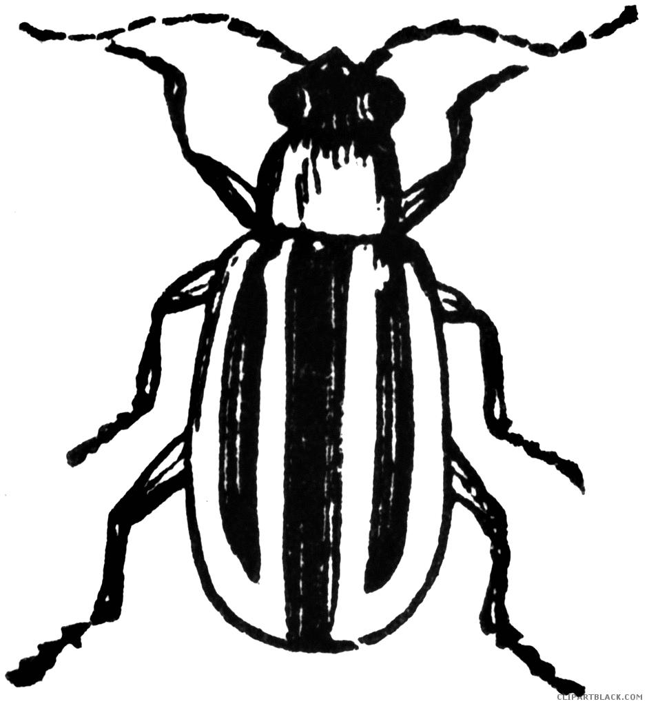 Clipartblack com animal free. Beetle clipart bettle