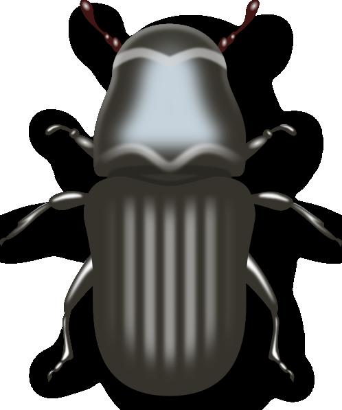 Jameshfisher pine clip art. Beetle clipart bettle