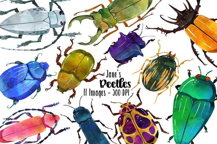 Beetle clipart bettle. Watercolor