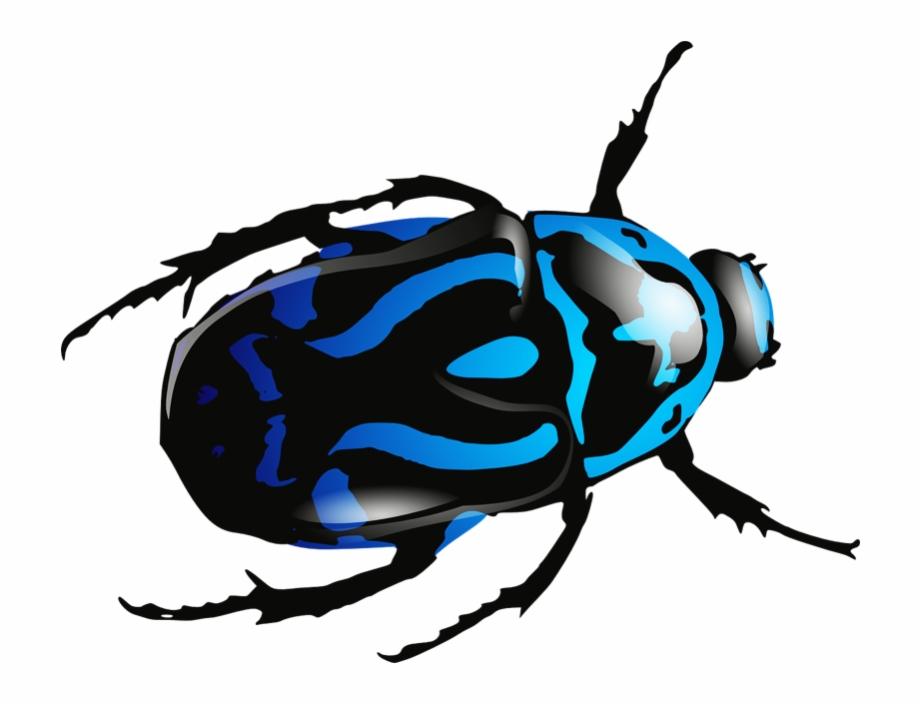 Beetle clipart bettle. Blue png image clip