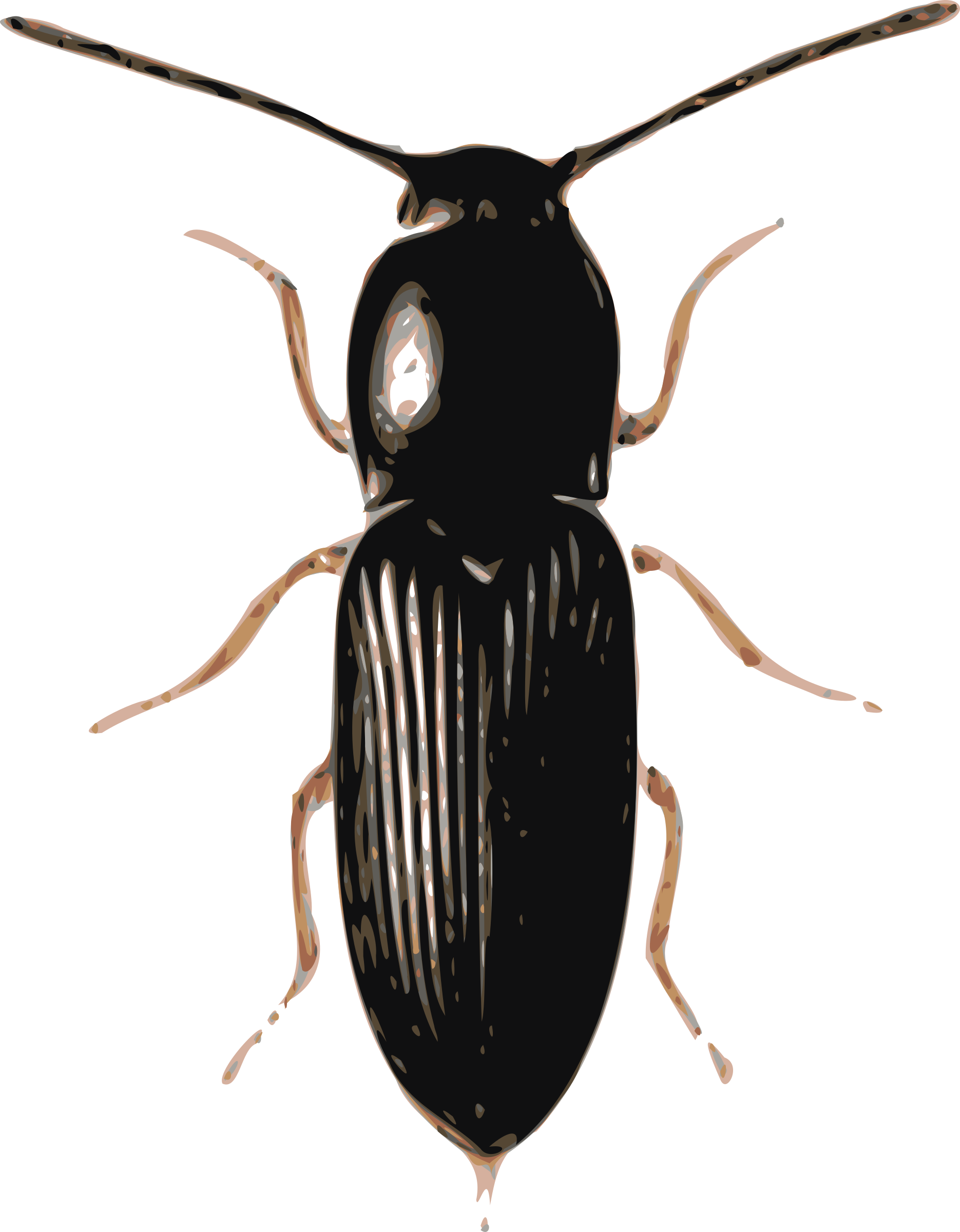 Cardiophorus big image png. Insects clipart darkling beetle