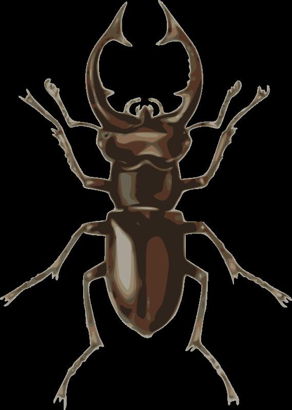Stag lucanus elephas medium. Beetle clipart cartoon