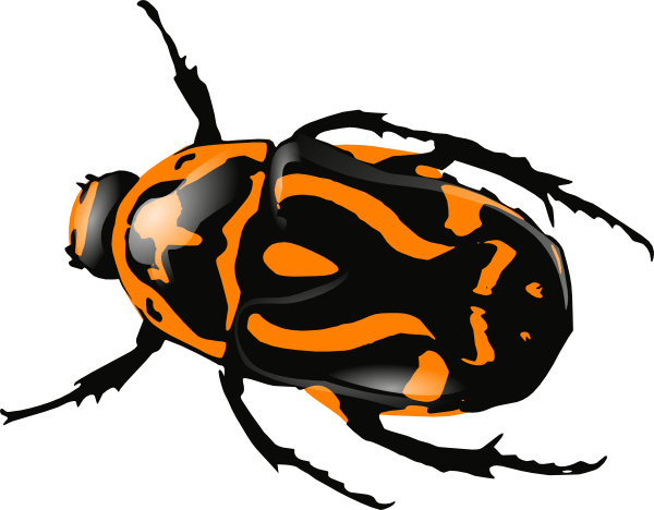 Beetle clip art at. Insects clipart orange bug