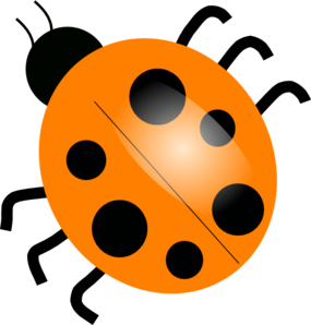 Ladybug clipart 10 orange. Colorful pencil and in