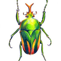 Beetle colorful