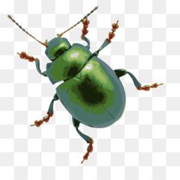 Beetle clipart green beetle. Grasshopper cricket stock photography