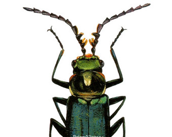 Beetle clipart green beetle. Clip art etsy print