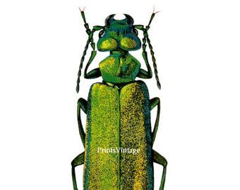 Clip art etsy print. Beetle clipart green beetle