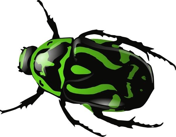 Clip art free vector. Beetle clipart green beetle