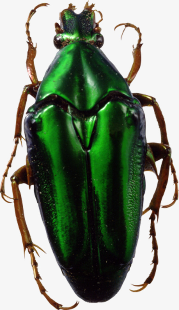 Beetle clipart green beetle. Insect hard shell insects