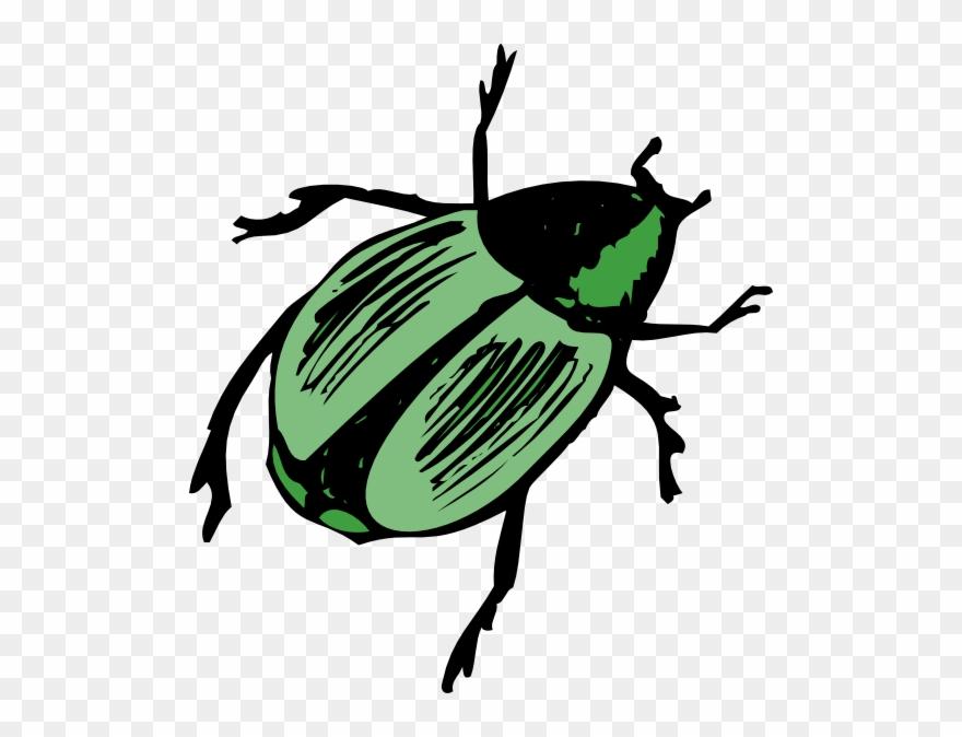 Shiny clip art png. Beetle clipart green beetle