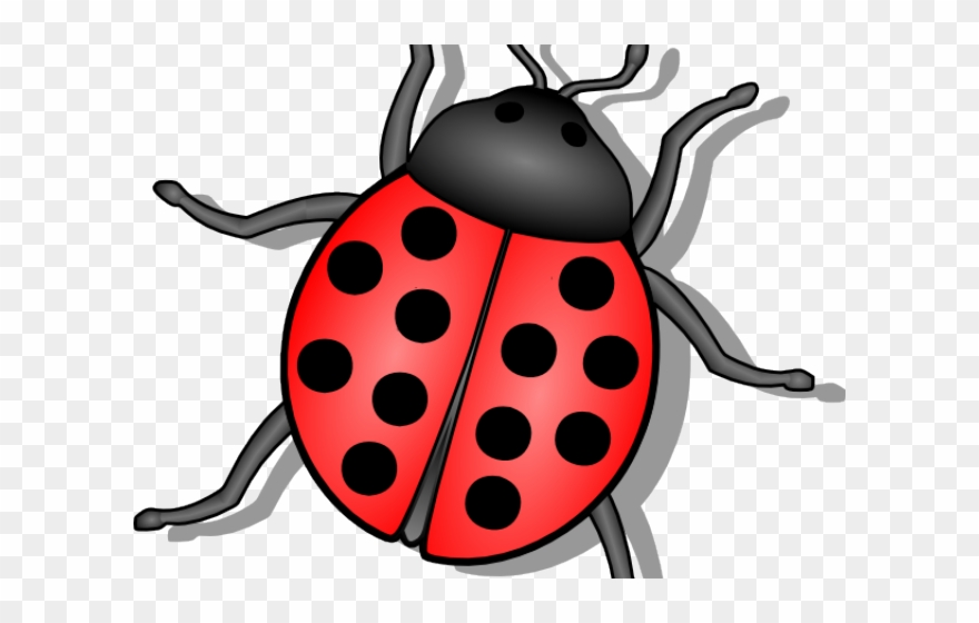 Beetle lady bug png. Bugs clipart animated