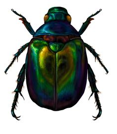 Egyptian drawing at getdrawings. Bug clipart scarab beetle