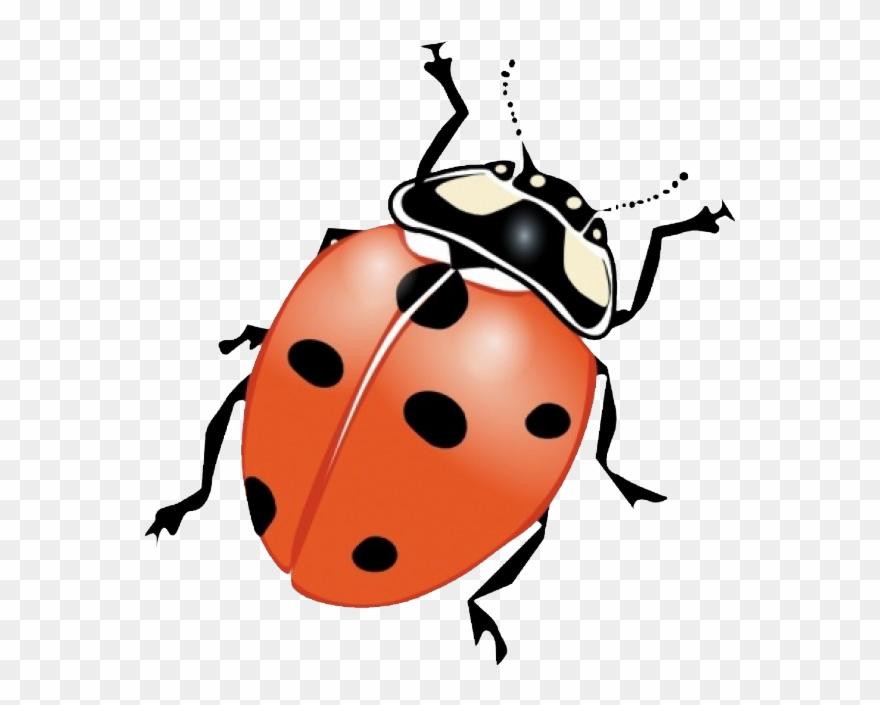 Ladybugs clipart junebug. Graphic freeuse stock beetle