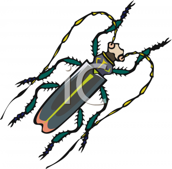 Insect clip art of. Beetle clipart little bug